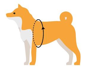 如何量狗的胸圍