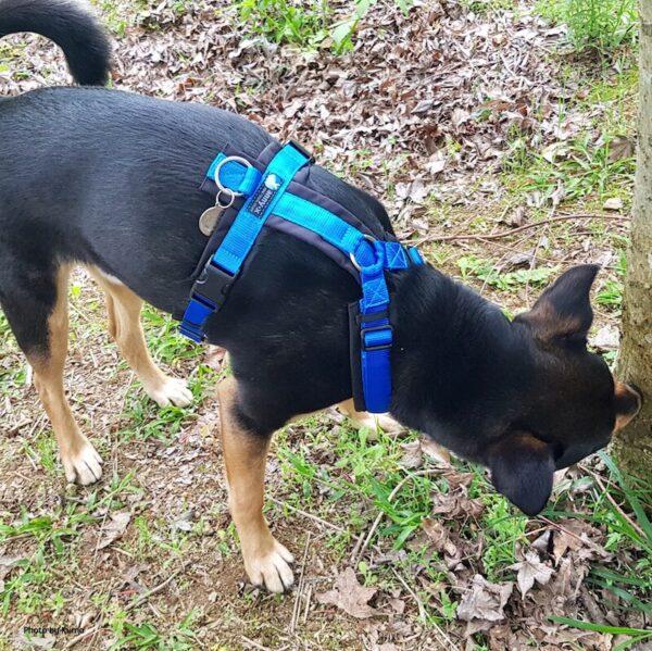 米克斯犬穿M號 Annyx 樂趣胸背帶