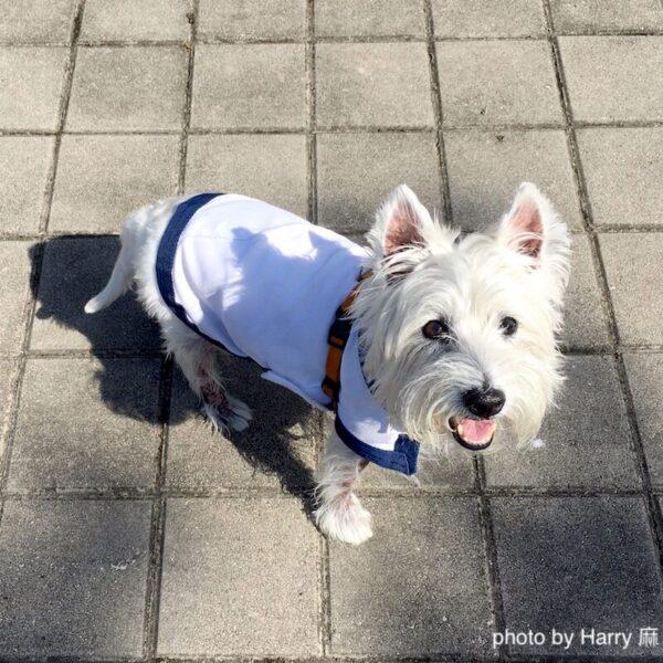 西高地㹴犬狗涼涼衣