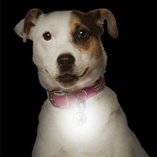 Spotlit LED 安全夜間警示燈 狗夜間燈扣 夜間遛狗燈