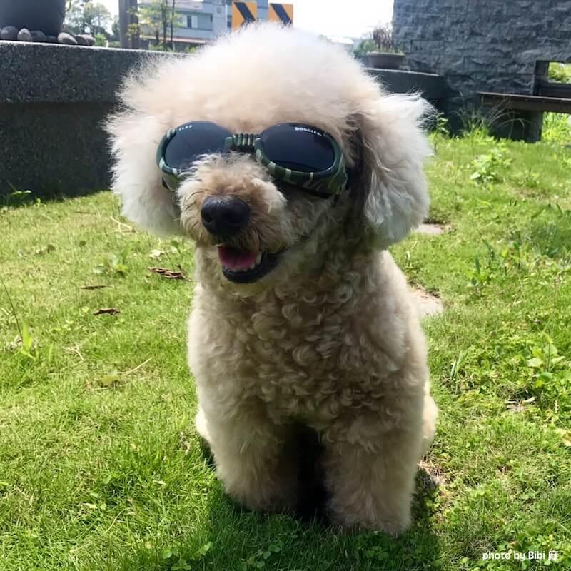 Doggles 狗狗太陽眼鏡