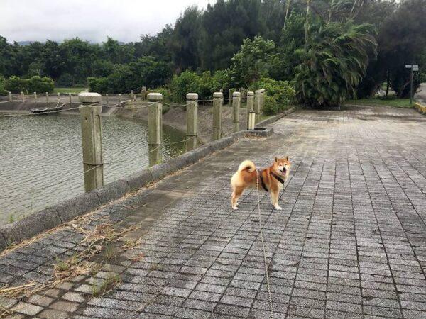 Mendota 4.5公尺長距離牽繩柴犬