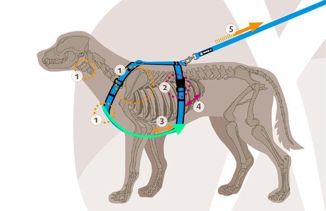 annyx 胸背帶透視圖