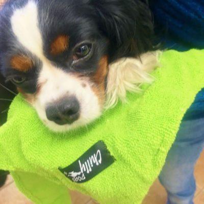 Chilly Dogs 超細纖維吸水毛巾