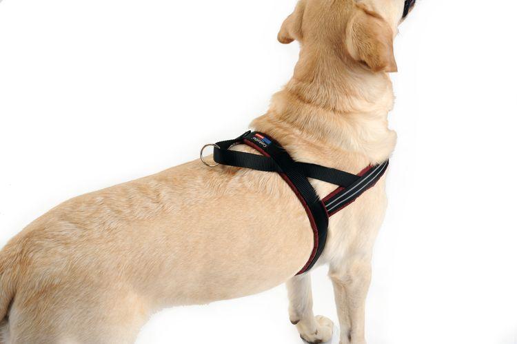 ComfortFlex 快套運動胸背帶